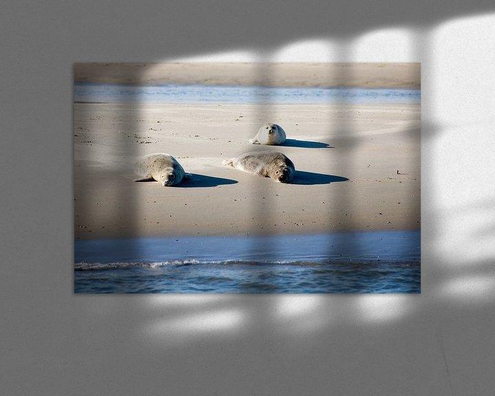 Impression: Zeehonden op het wad sur Jim van Iterson