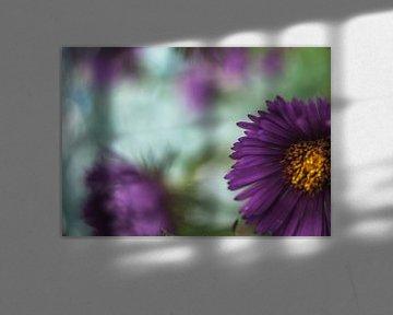 Wilde Blume von Minie Drost