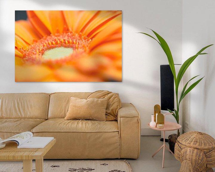 Impression: Orange Gerbera sur Kimberly van Aalten