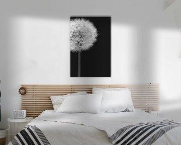 Zwart wit close up van een paardebloem (dandelion) von Natascha Teubl