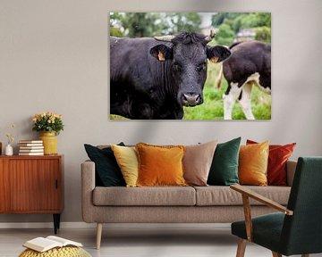 Koe in de wei van Nina van der Kleij