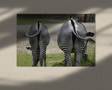 Portrait van Zebra's - den dikke en den dunne von Bruno Baudry