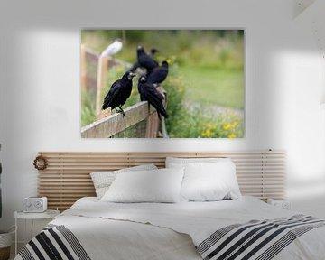 Portrait van zwarte raven die zij-aan-zij op een hek zitten von Bruno Baudry