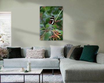 Portrait van een mooie kleurige vlinder op een blad von Bruno Baudry