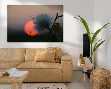 macro zonsondergang pluisjes  von Maarten Honinx