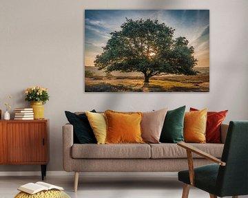 De glorieuze boom van Peter Bijsterveld