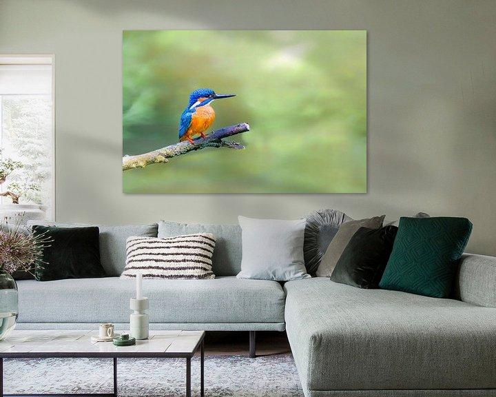 Sfeerimpressie: IJsvogel zittend op een tak met uitzicht op een kleine vijver van Sjoerd van der Wal