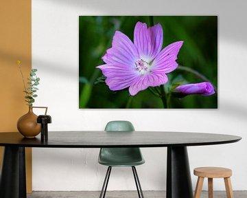 Paarse bloem von Jos Reimering