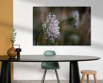 Scherm van witte bloemen von Jos Reimering