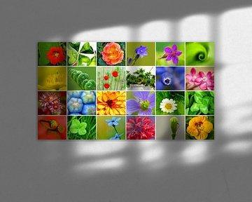 Bunte Blumen von Caroline Lichthart
