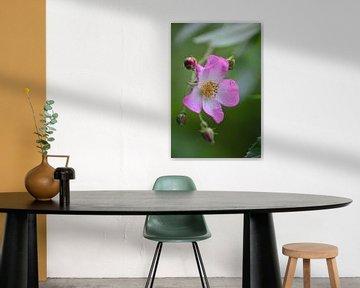 roze bloem von Joke te Grotenhuis