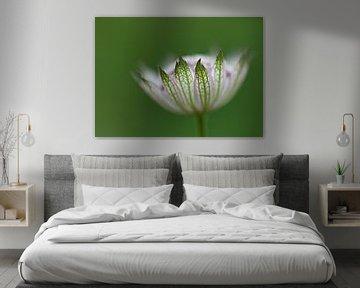Wit en groen von Karin Tebes