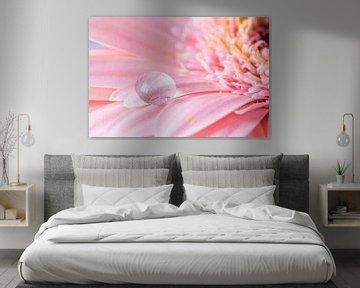 Druppel op roze Gerbera bloem van Anne-Marie Pannekoek
