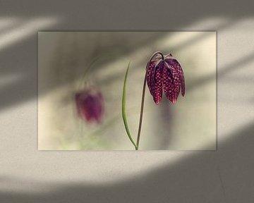Kievietsbloem von Esther Bakker-van Aalderen