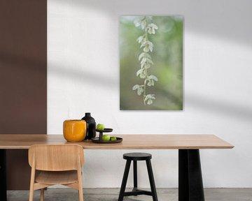 Bloemenpracht von Esther Bakker-van Aalderen