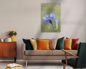 Korenbloem von Esther Bakker-van Aalderen