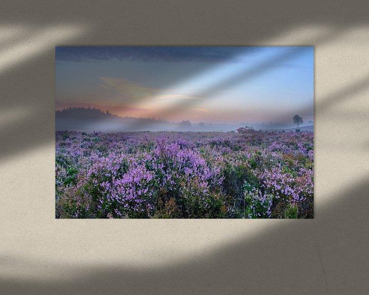 Sfeerimpressie: Bloeiende Heideplanten in Heidelandschap tijdens zonsopgang in de zomer op de Veluwe van Sjoerd van der Wal