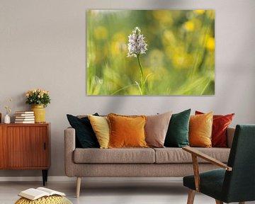Gevlekte orchis tussen de boterbloemen von Francois Debets