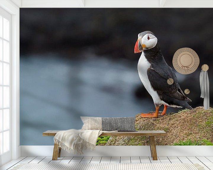 Sfeerimpressie behang: Papegaaiduiker op een rots van Menno Schaefer