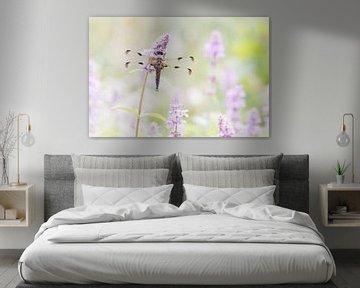 Viervlek in roze dromen van Francois Debets