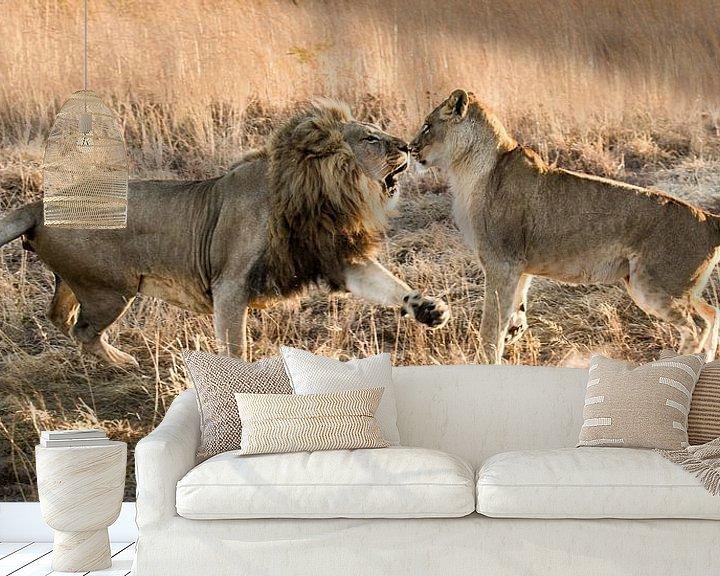 Beispiel fototapete: Kattengevecht (Cat fight) von Claudia van Zanten