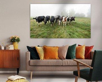 Kühe auf der Wiese. von Paul Wendels