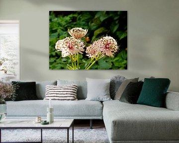 bloemen von Joelle van Buren