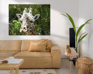 giraffe von Joelle van Buren