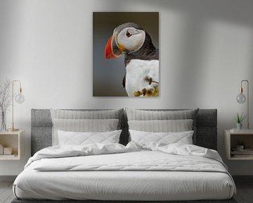 Portret van een papegaaiduiker van Menno Schaefer