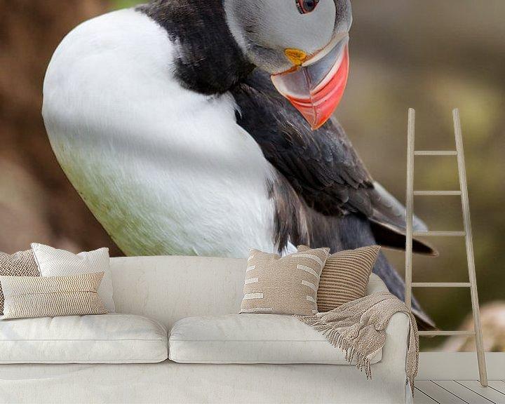 Beispiel fototapete: Papegaaiduiker kijkt omlaag von Menno Schaefer