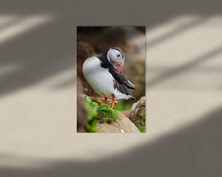 Beispiel: Papegaaiduiker kijkt omlaag von Menno Schaefer