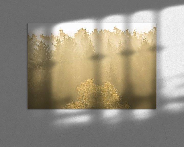 Sfeerimpressie: Naaldbomen in tegenlich van Elroy Spelbos