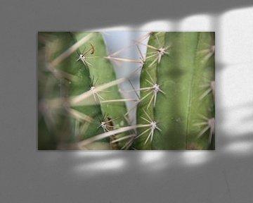 Kaktus von Floor Singelenberg