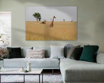 Giraffe in de savanne van Jim van Iterson