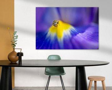 Citroenlieveheersbeestje op een blauwe iris van Carol Thoelen