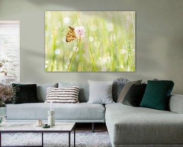 Purperstreepparelmoervlinder in de Eifel