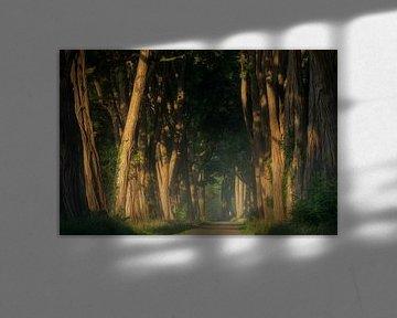 Acacias at Sunrise van Martin Podt