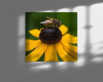 Bij op bloem von Ingrid Ronde