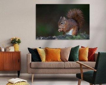 Rode Eekhoorn in het bos von Michel de Beer