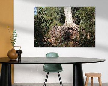 Foto van wortels van een boom van Nicole Habets