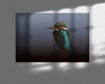 IJsvogel op een stronk von Michel de Beer