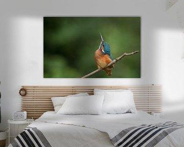 IJsvogel omhoog kijkend von Michel de Beer