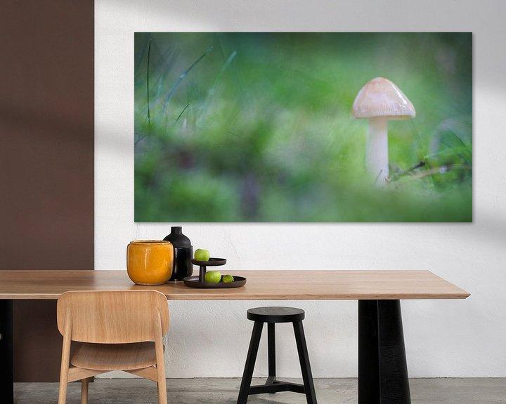 Impression: Mushroom in green sur Martzen Fotografie