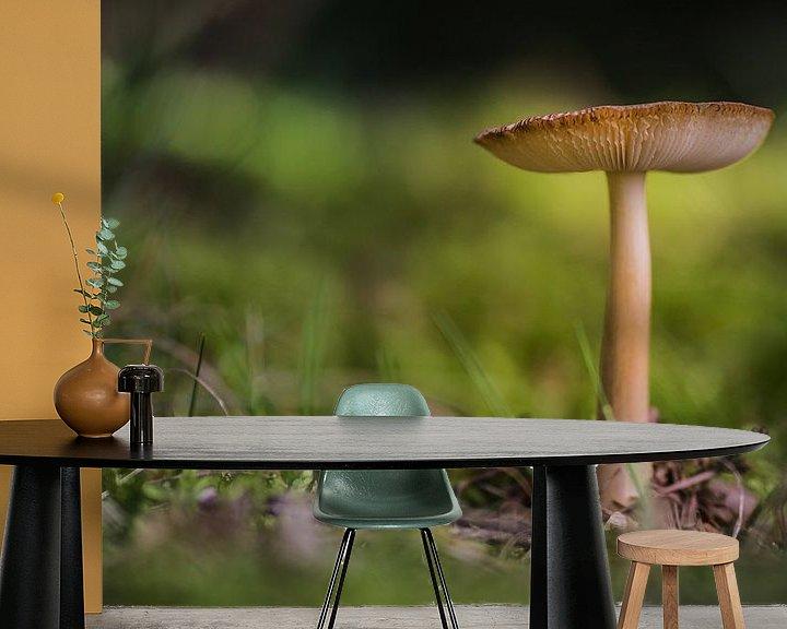 Impression: Mushroom sur Martzen Fotografie