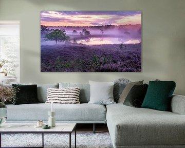 Heide in de mist - Het Bergerbos van Henk Verheyen