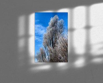 Besneeuwde boomtoppen: winter in Nederland.