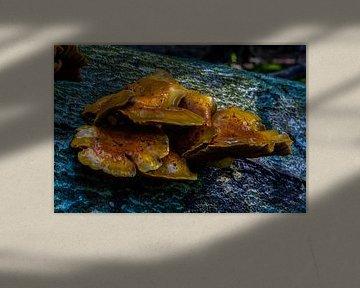 Kleurenpalet Paddenstoel von Mark Balster