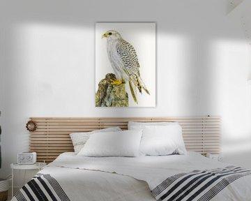 Rariteiten Cabinet Vogel_02 von Marielle Leenders