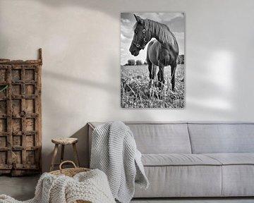 Pony von Mariska Hofman