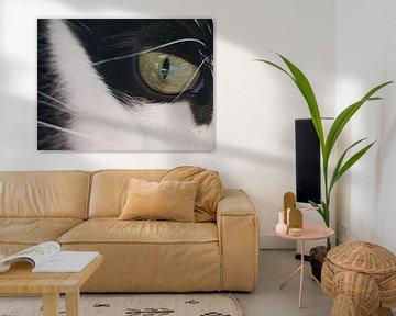 Kattenoog sur Joelle van Buren